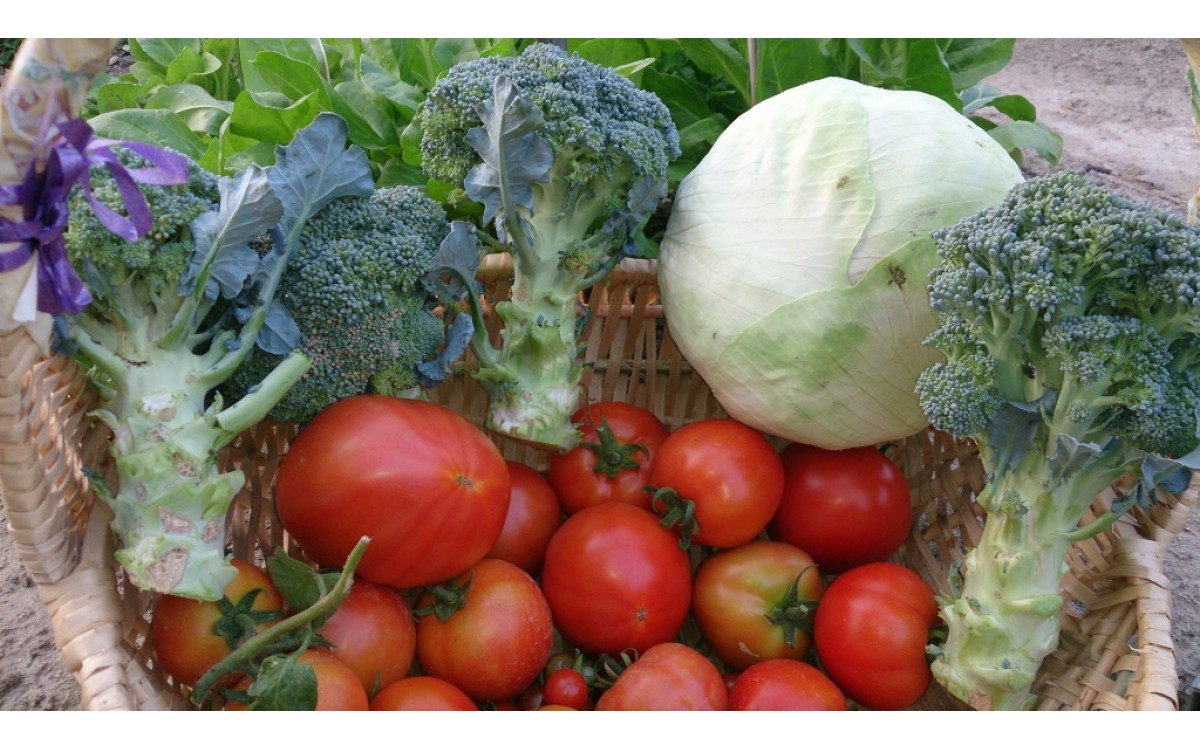 四季蔬菜種植介紹
