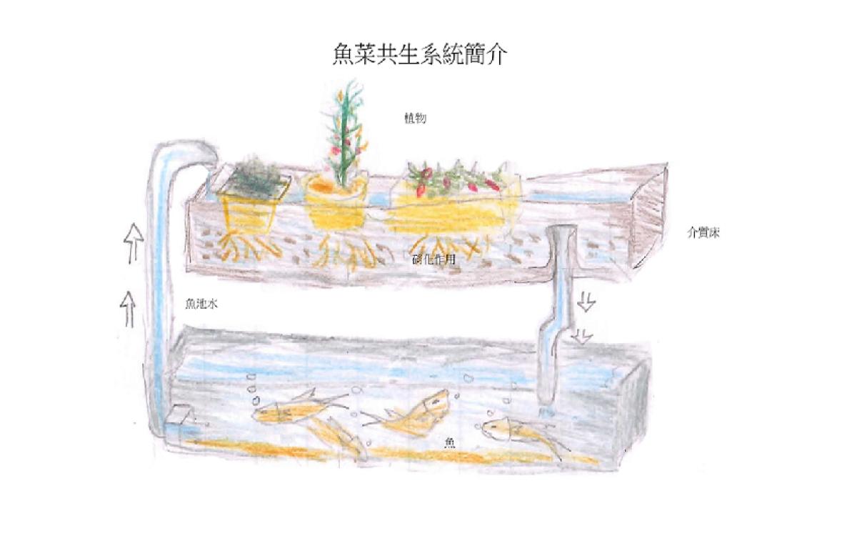 魚菜共生系統分享